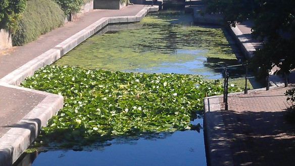 Lily pads [1]