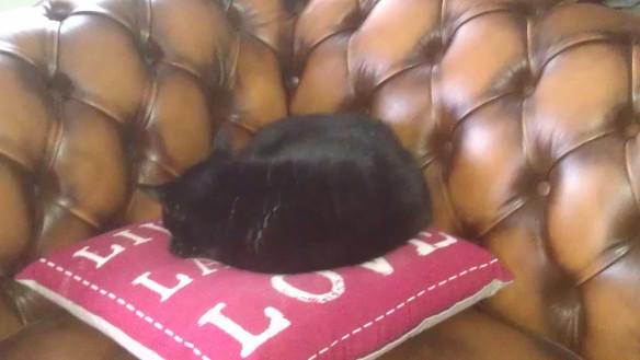 Juno cushion [3]