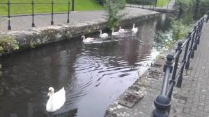 Swan family 2012 2