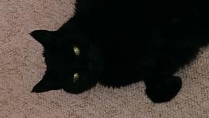 Juno eyes