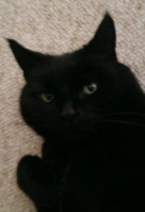 Juno face