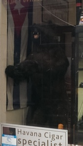 Bear shop [1]