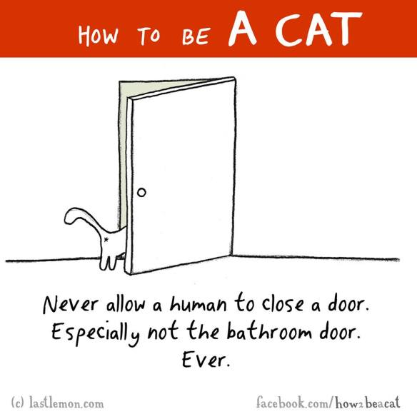 How to be a cat 5