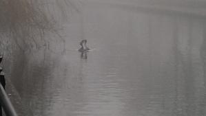 Foggy day [1]