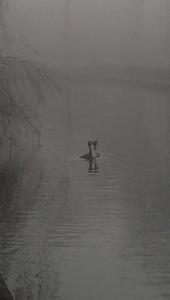 Foggy day [2]