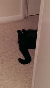 Half cat half door