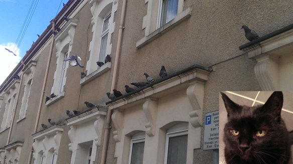 Cat amongst pidgeons