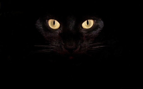 black-cat-eyes-cute-pet-cat-desktop-pictures-cute-1538612781
