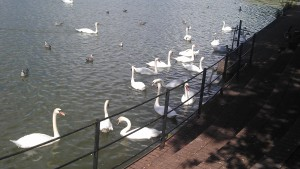 Roath park lake [12]