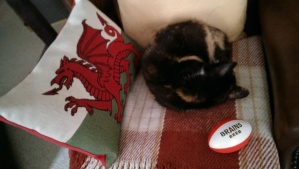 Rugby cat