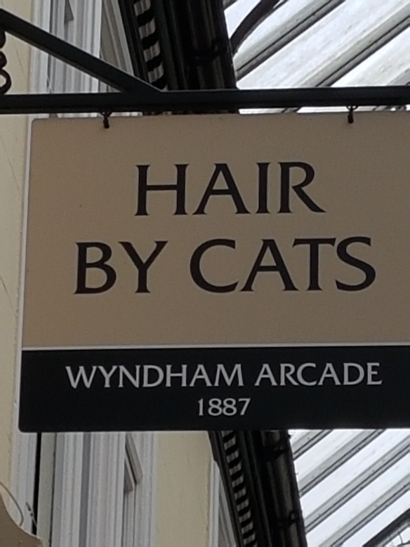 Hair by Cats [2]