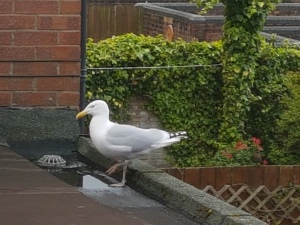 Seagull on binstore