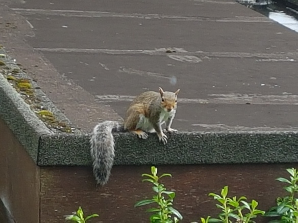 Squirrell [5]