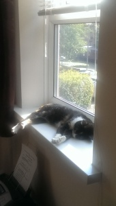 chilling-in-the-sun