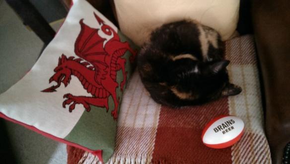 rugby-cat