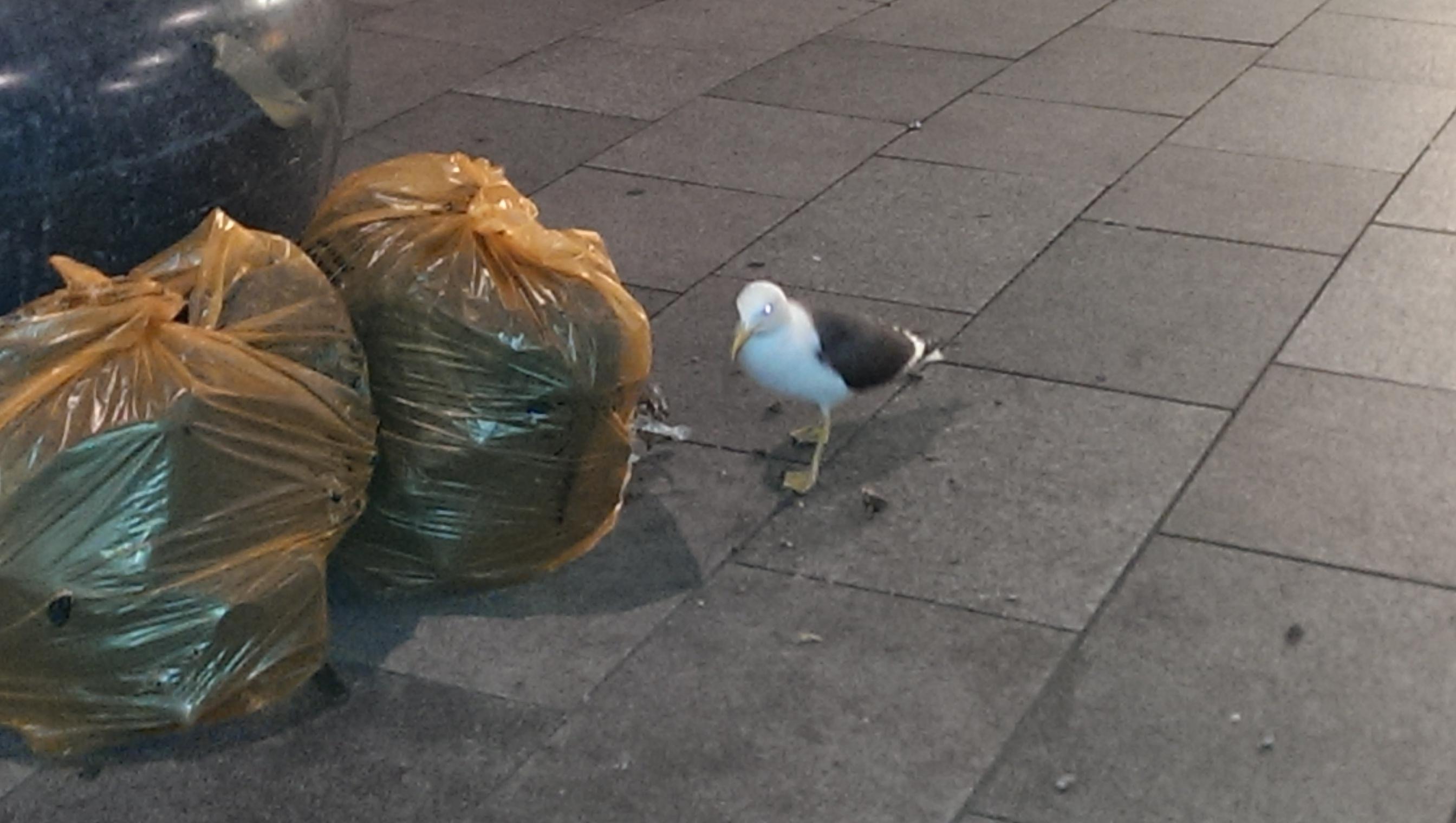 Street Food seagull