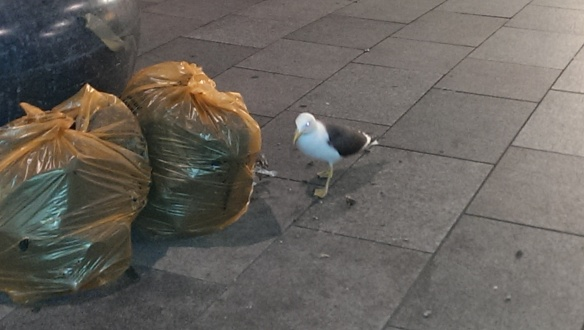 Street Food seagull
