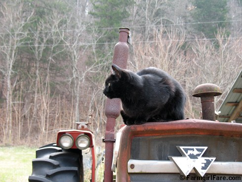 Mr. Midnight Tractor Cat